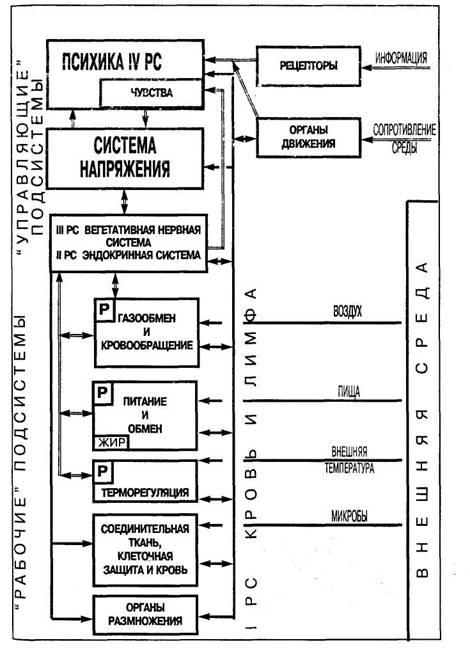 Рис. 3 Схема организма