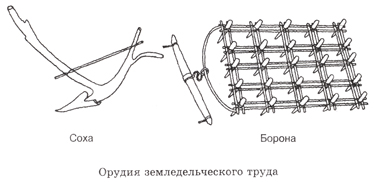 саранча. картинка