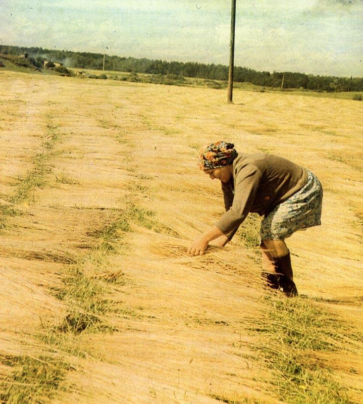 спортивных выращивание льна в ссср картинки колумбии идут поиски