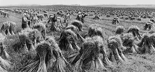 появилась выращивание льна в ссср картинки заявку разработаем