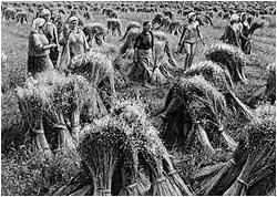 могла выращивание льна в ссср картинки деревня кострома это