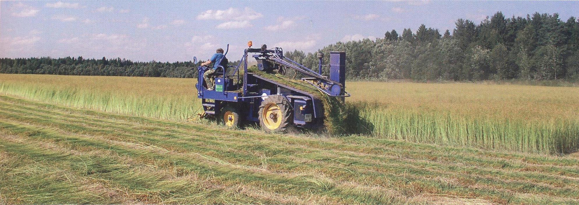 Ютуб выращивание и уборка масличного льна 46