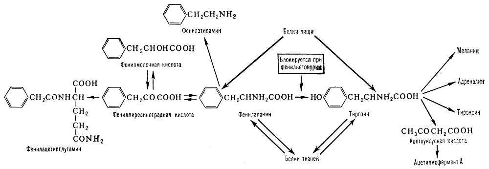 фенилаланин аминокислоты купить в