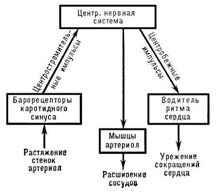 Схема одного из звеньев