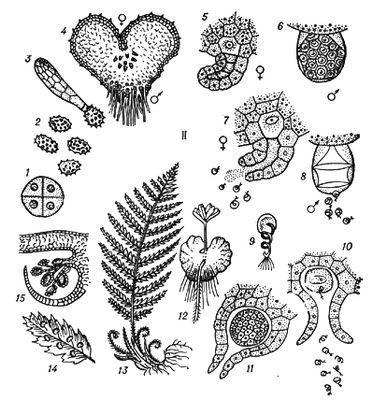 поколений у растений.
