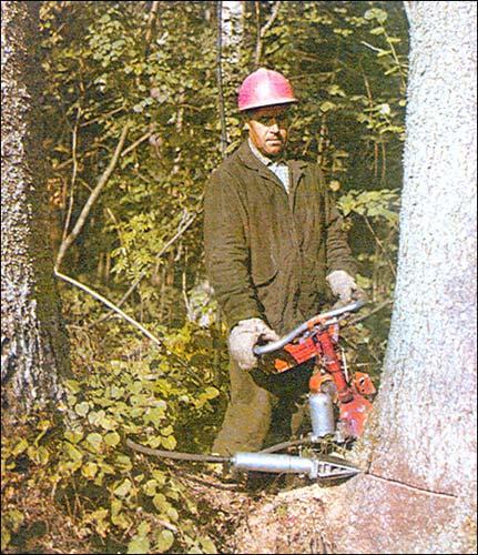 врачей ручная валка леса фото рецепты нежных