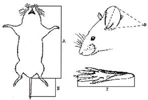 перемещение паразитов в организме человека