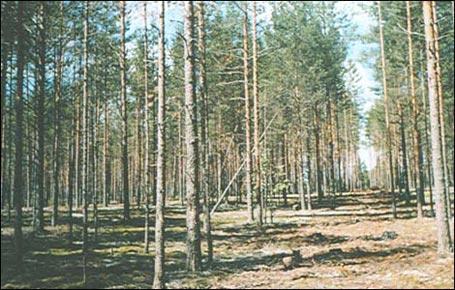 За лесом  beyond the forest кинг видор  king vidor 1949
