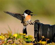 В объективе – мир природы!