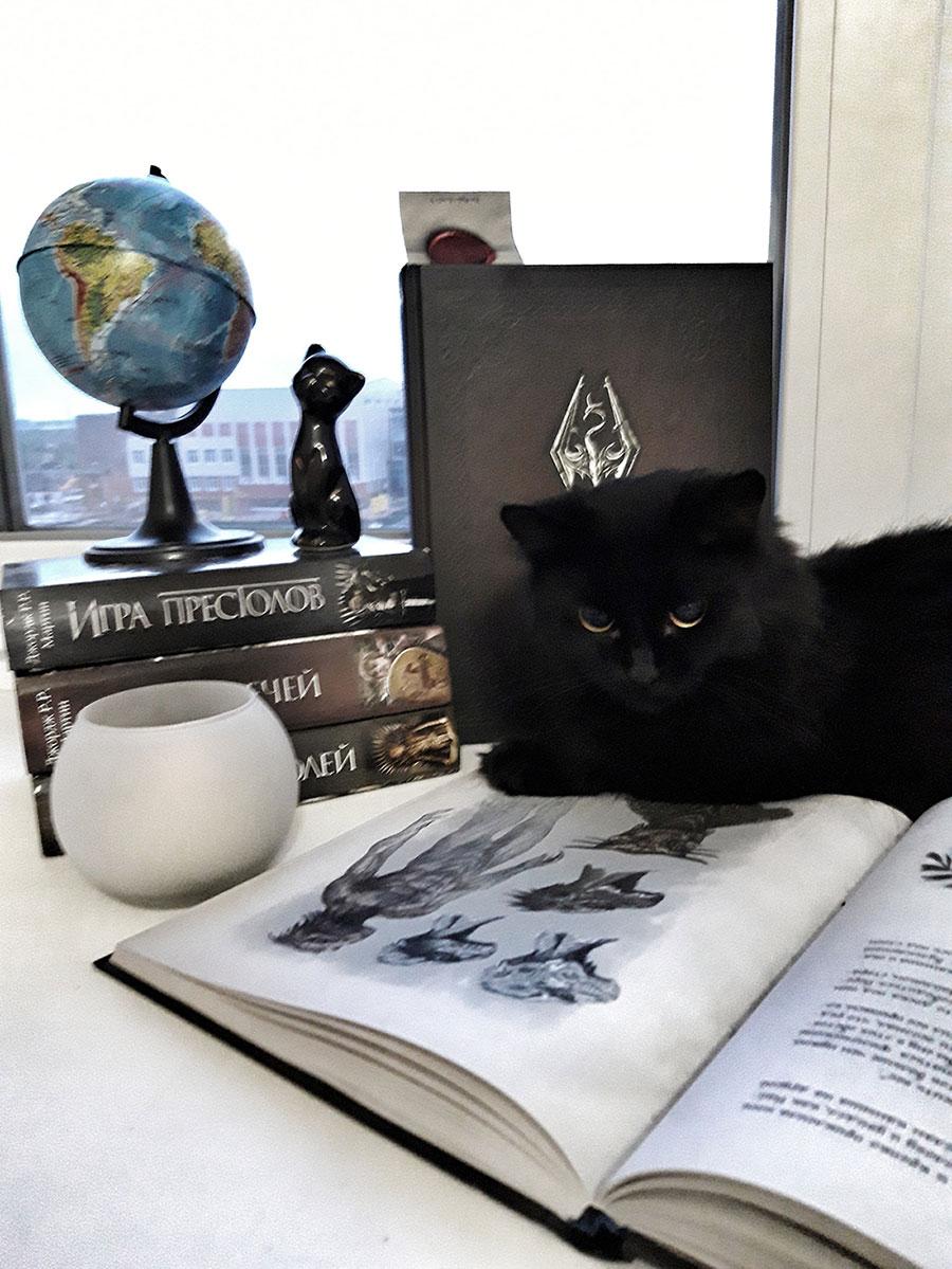 Выставка «Коты и книги»
