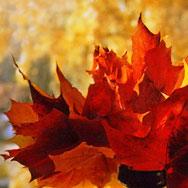 Рубцовская осень дарит вологжанам «Рубцовский букет»