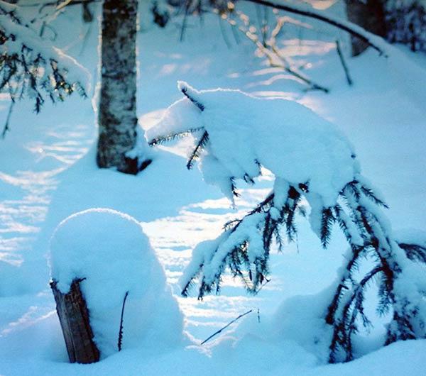 Снежный волк. Татьяна Семьянихина