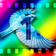«В поисках Синей птицы»