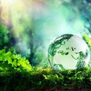 «Эффективные эколого-просветительские библиотечные практики»